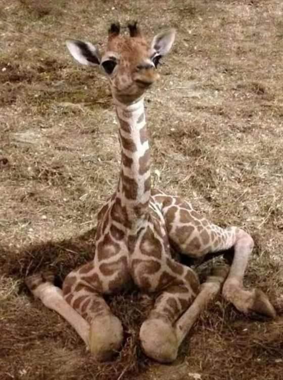 Giraffe_IMG-20210223-WA0002.jpg